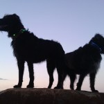 2 Hunde beim Sonnenuntergang