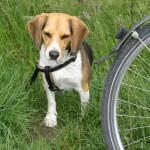 Pause nach Fahrradfahrt mit dem Hund