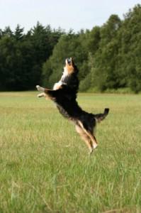 Hund schnappt sich den Ball in der Luft