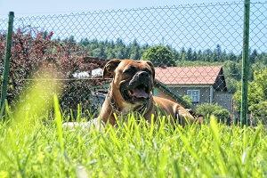 Den Garten Hundesicher Machen Hundetraumland