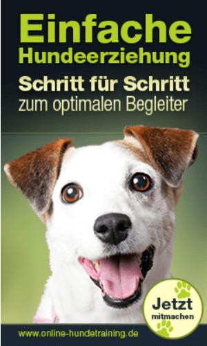Hundeerziehung1