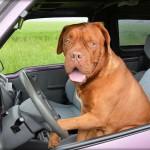 dog-165210_1280