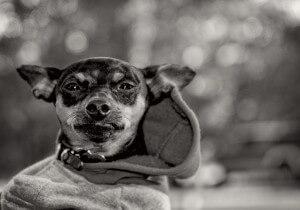 dog-444929_1280