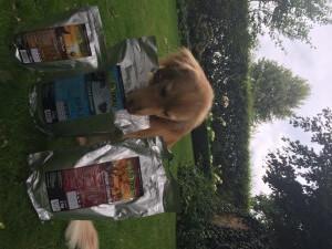 Wildborn Hundefutter Test