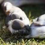 Hunde Pfotenschutz