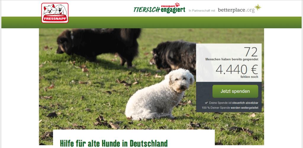 Hilfe für alte Hunde in Deutschland
