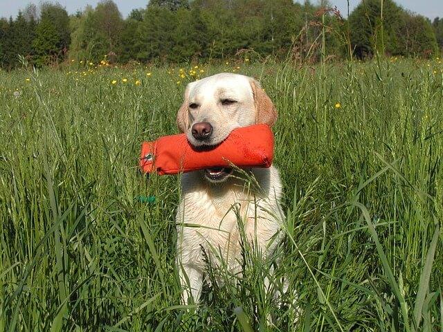 Dummytraining für Hunde