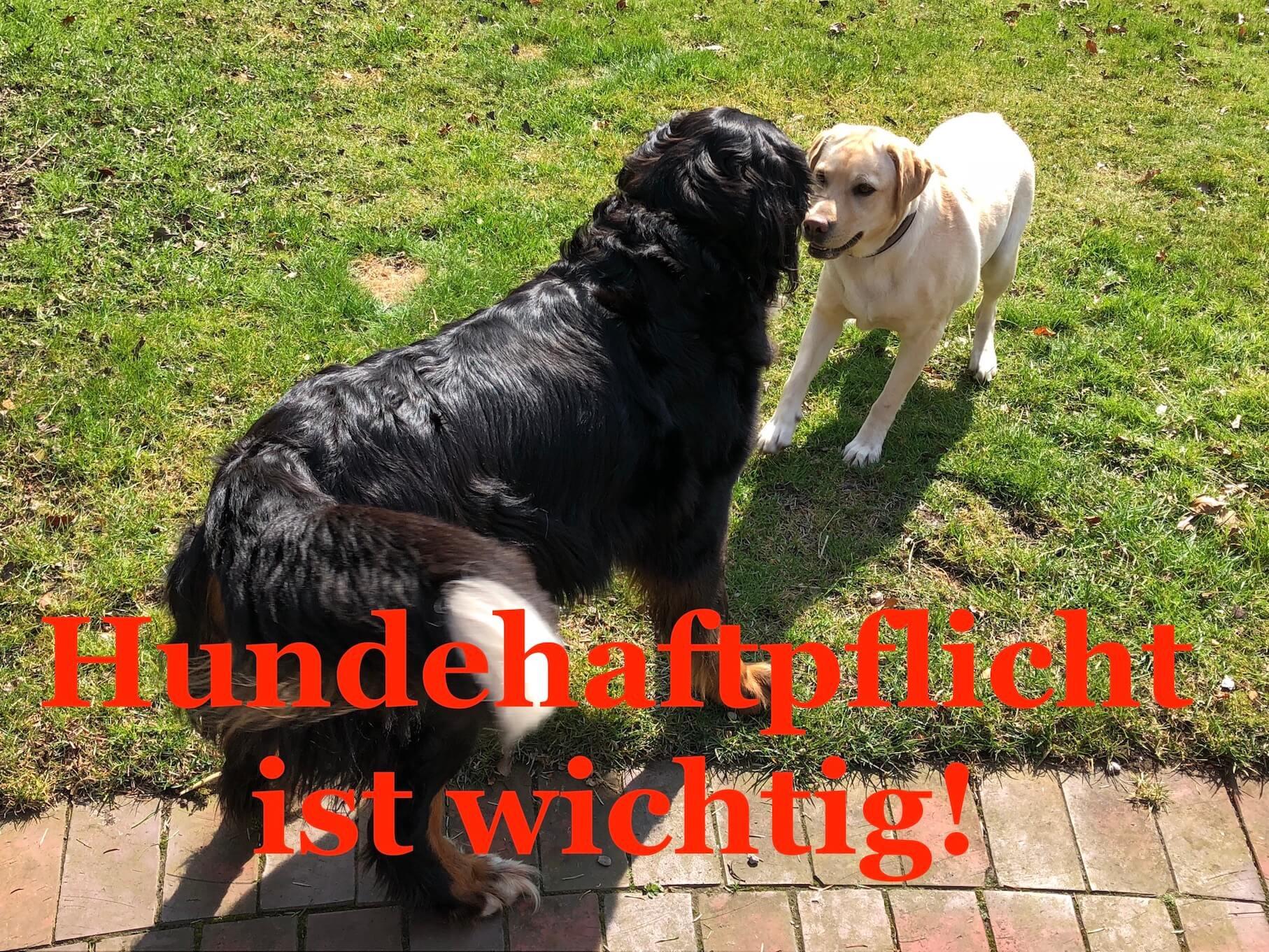 3 Fragen die man sich stellen sollte, bevor man auf eine Hundehaftpflicht verzichtet!